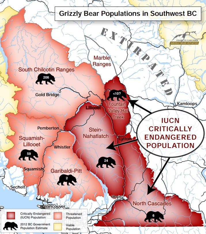 Grizzly Bears – CPAWS British Columbia on hope ny map, hope nj map, hope michigan map, hope facebook, pitt meadows, point hope alaska map, hope az map, hope nd map, hope maine map, hope montana map, hope fishing, maple ridge, golden ears provincial park, new hope pa map, british columbia map, hope ak map, white rock, terry fox marathon of hope map, hope idaho map, hope canada map, hope ar map, hope florida map, dawson creek, port hope map, hope worcester,
